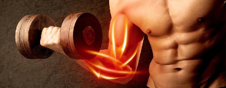 hgh muscle mass